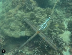Anchor inside Corals